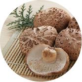 椎茸、ウドなどの山菜